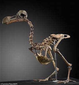 Dodo skeleton could be worth £500k at auction   Daily Mail ...