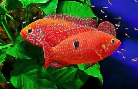les 25 meilleures id 233 es concernant aquarium pour poisson