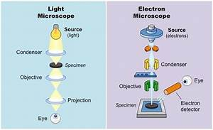Difference Between Light Microscope And Electron Microscope What Is The Difference Between Optical Microscope And