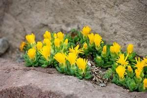 Blumen Für Steingarten : pflanzen steingarten sonnig wohn design ~ Markanthonyermac.com Haus und Dekorationen