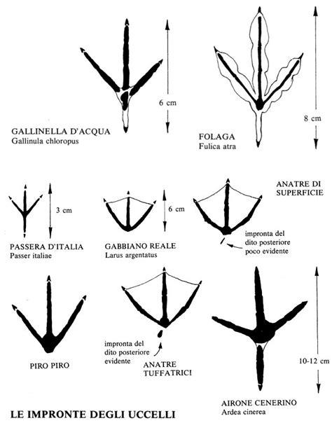 Diversi Tipi Di Piedi Tracce Di Animalie Uccelli