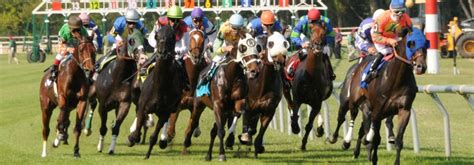 vic monte  horse racing picks friday january