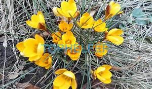 Blumen Im Frühling : blumen im fr hling kunterbunte blumenkisten gestalten tophelfer ~ Orissabook.com Haus und Dekorationen