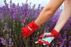 Lavendel Wann Schneiden : lavendel garten ratgeber ~ Lizthompson.info Haus und Dekorationen