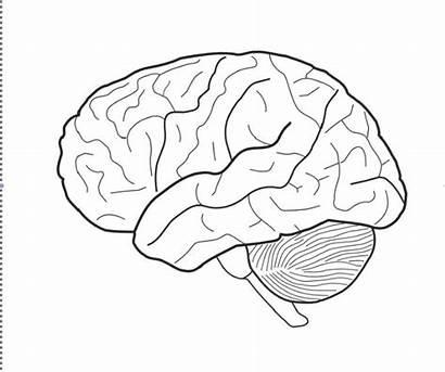 Brain Coloring Pages Diagram Template Printable Kid