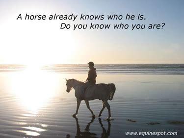 horse quotes success quotesgram