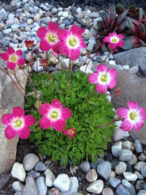 rock garden flowers landscaping