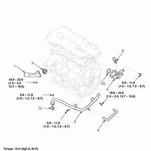 Hyundai Accent  Thermostat  Components And Components