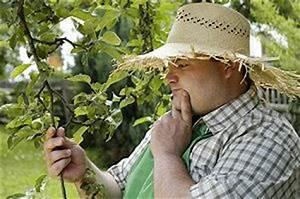 Wann Schneidet Man Apfelbäume : anleitung zum apfelbaum schneiden zeitpunkt ~ Lizthompson.info Haus und Dekorationen