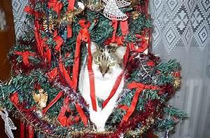 Sapin De Noel Tout Pret : comment faire son sapin de no l quand on vit avec un chat ~ Melissatoandfro.com Idées de Décoration