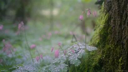 Rain Nature Gifs Summer Makeagif Shower Gentle