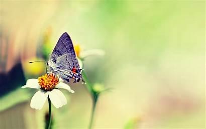 Butterfly Wallpapers Colorful Flower Butterflies Heart