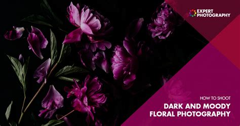 shoot moody flower photography dark photography tips