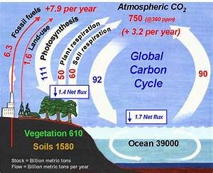 The Carbon Cycle Lecture Notes  Global Change Project