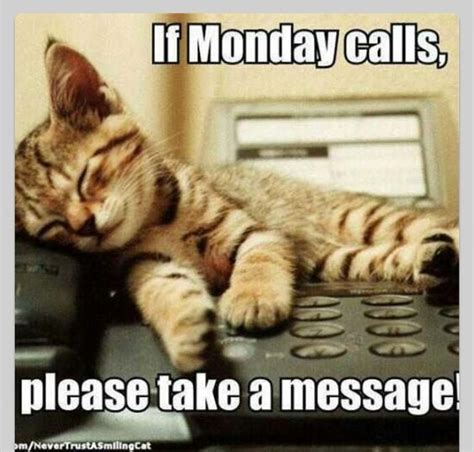 Monday Cat Meme - monday pets funny cats pet memes pinterest monday cat pets and dog houses
