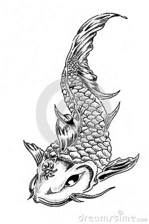Hand drawing of koi carp stock illustration. Illustration