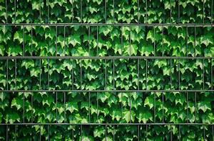 Sichtschutz Für Doppelstabmattenzaun : sichtschutz dekor steinwand efeu doppelstabmattenzaun ~ Michelbontemps.com Haus und Dekorationen