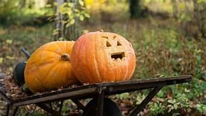 5, Inexpensive, Halloween, Decorations