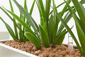 Pflege Von Zimmerpflanzen : pflege von zimmerpflanzen kann so easy sein gawina hydrokultur raumbegr nung ~ Markanthonyermac.com Haus und Dekorationen