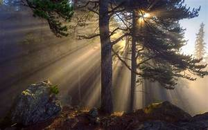 Morning, Forest, Sun, Rays, Trees, Rocks, Wallpaper