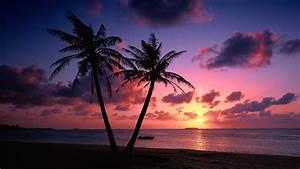 Beach Sunset Palm Trees Wallpaper