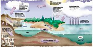 the water cycle dogfoose michael