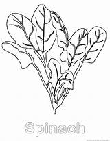 Spinach Coloring Vegetable Pages Print Designlooter Drawings sketch template