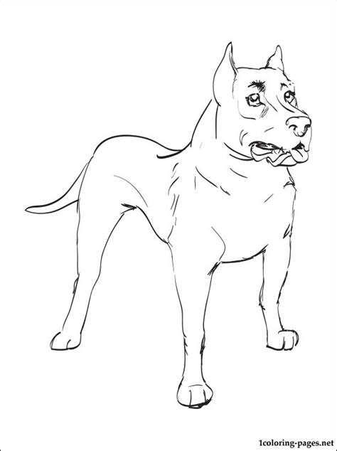 staffordshire bull terrier coloring page coloring pages