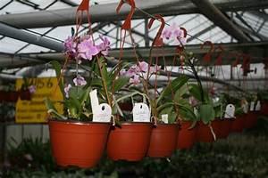 Orchideen Oase Berlin : orchideenh ndler orchideenfans blog ~ A.2002-acura-tl-radio.info Haus und Dekorationen