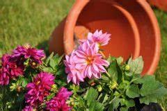 Wann Wein Pflanzen : erdbeeren pflanzen wann ist die beste zeit ~ Orissabook.com Haus und Dekorationen