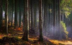 Landscape, Nature, Sun, Rays, Forest, Mist, Trees, Morning, Sunlight, Wallpaper