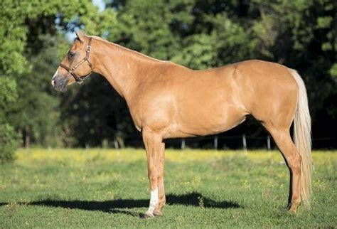 horse quarter expensive