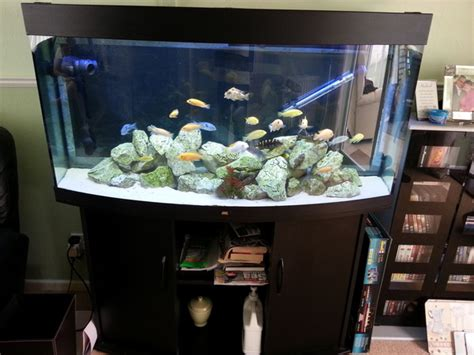juwel vision 260 bow front aquarium with cabinet and lots of extras just add fish 163 250 ono at