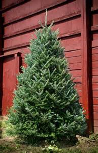 free shipping site wide at live christmas tree online retailer green valley christmas trees