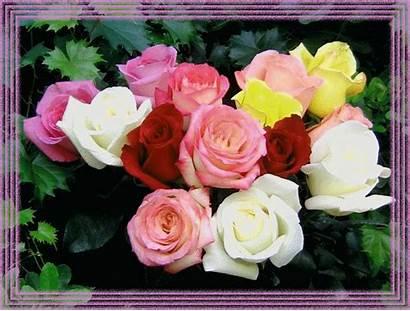 Animees Belles Jolies Tres Roses