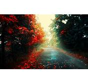Red Leaves Road Forest Landscape Fall Wallpapers HD