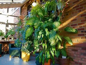 9, Indoor, Plants, You, Can, U0026, 39, T, Kill, So, Easily