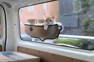 cat window perch tooty store 39 s cat hammock goes viral daily mail