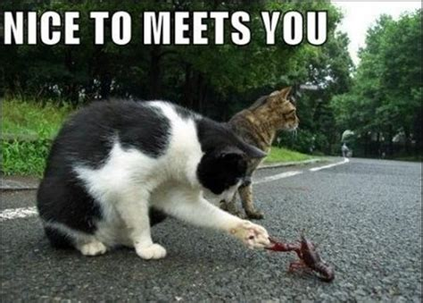 Funny Image 30 Funny Animal Captions  Part 2 (30 Pics