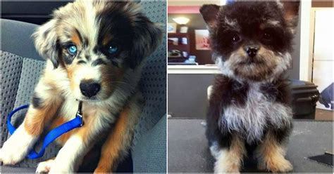 mixed breed dogs youve