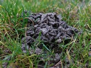 Vers De Terre Acheter : les turricules de vers de terre ~ Farleysfitness.com Idées de Décoration