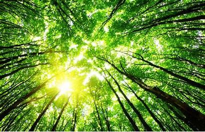 Environmental Background Forest Litigation Manatt Team