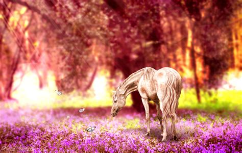 wallpaper horse butterflies hd animals