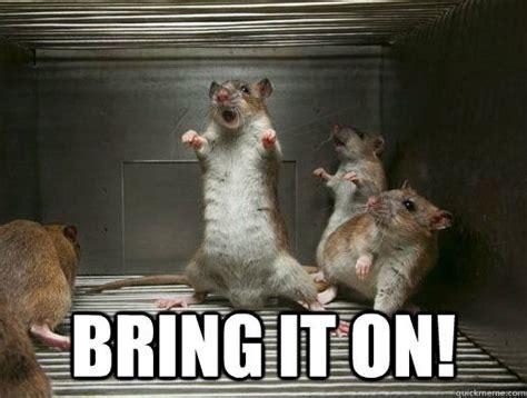 Rodent Meme - 17 best rat memes images on pinterest rats pet rats and rodents