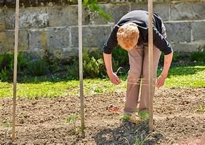 Comment Tuteurer Les Tomates : tuteur de tomates types mat riaux et prix ooreka ~ Melissatoandfro.com Idées de Décoration
