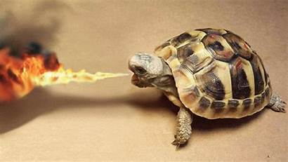 Turtle Fire Turtles Wallpapers Cool 1080p Breathing