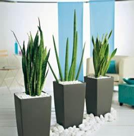 Plante Interieur Haute : nouveau look pour plantes sans soucis conseils plantes vertes d 39 int rieur truffaut ~ Teatrodelosmanantiales.com Idées de Décoration