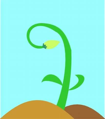 Clipart Nature Seedling Cartoon Clip Sapling Perfect
