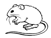 mouse coloring pages  printable activities mice