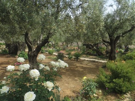 garden of gethsemane i walked today where jesus walked david williams violinist